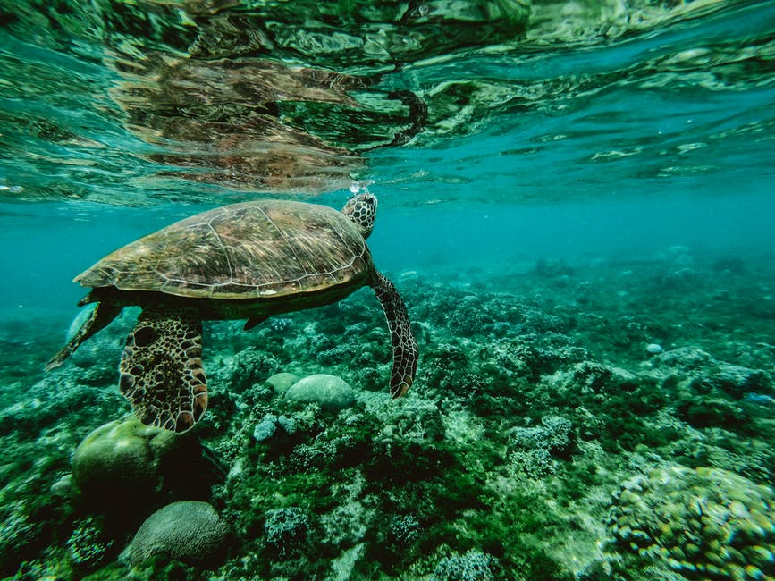 A turtle swimming under water